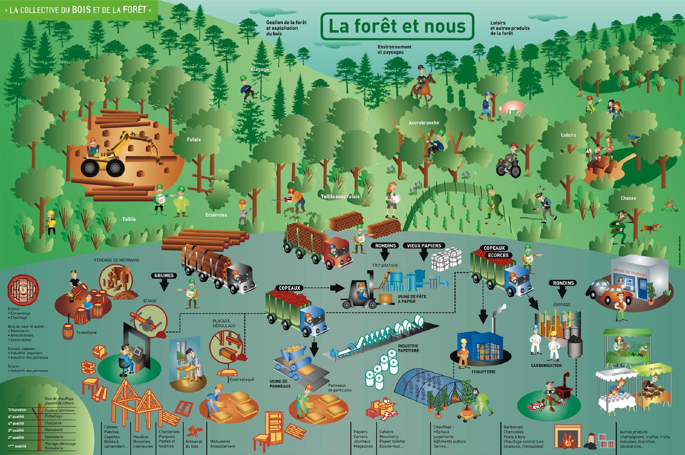 Fédération Interprofessionnelle For u00eat Bois alsacienne (FIBOIS Alsace) Chiffres clés et schéma  # La Soissonnaise Des Bois