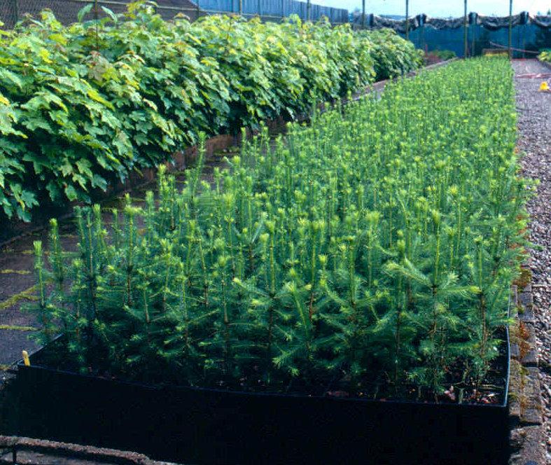 plantspepinièresourceUFEFVFE.jpg