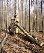 Récolte raisonnée du bois.
