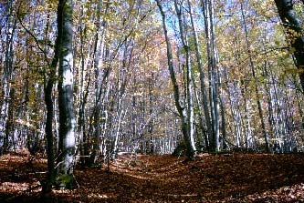 La forêt française.